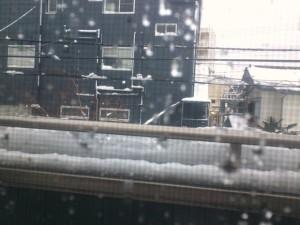 降り過ぎの初雪